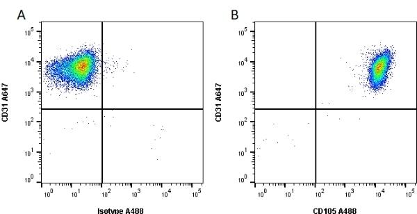 Anti Human CD105 Antibody, clone SN6 thumbnail image 1