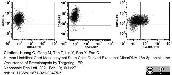 Anti Human CD105 Antibody, clone SN6 thumbnail image 24