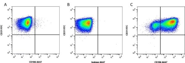 Anti Human CD106 Antibody, clone 1.G11B1 thumbnail image 1
