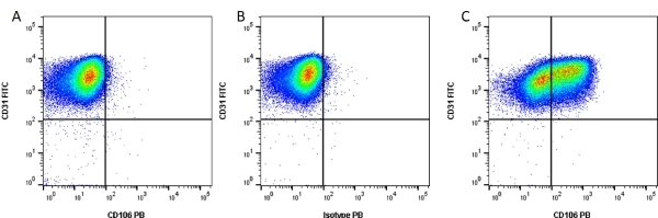 Anti Human CD106 Antibody, clone 1.G11B1 thumbnail image 3