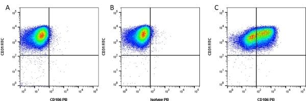 Anti Human CD106 Antibody, clone 1.G11B1 thumbnail image 5