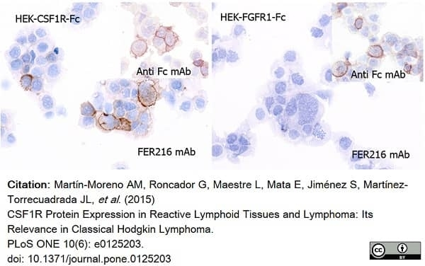 Anti Human CD115/CSF1R Antibody, clone FER216 thumbnail image 3