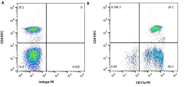 Anti Human CD11a Antibody, clone MEM-25 thumbnail image 4
