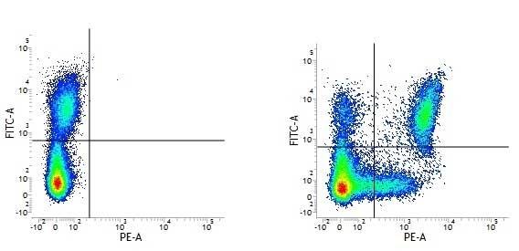 Anti Human CD11c Antibody, clone BU15 thumbnail image 1