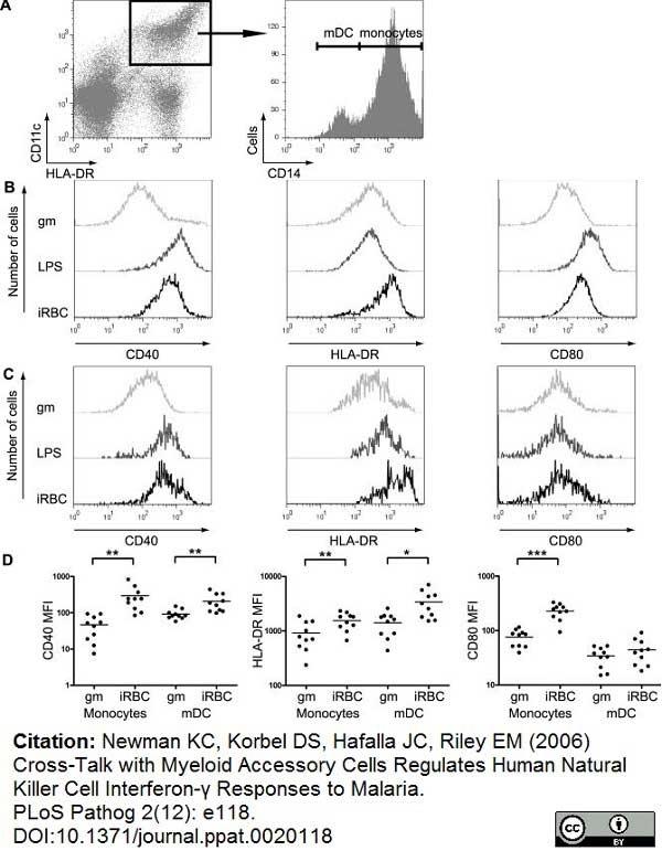 Anti Human CD11c Antibody, clone BU15 thumbnail image 2