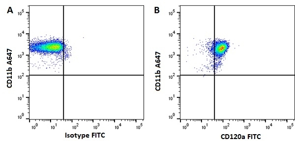 Anti Human CD120a Antibody, clone H398 gallery image 1
