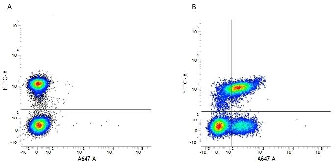 Anti Human CD127 Antibody, clone AbD11592 thumbnail image 2