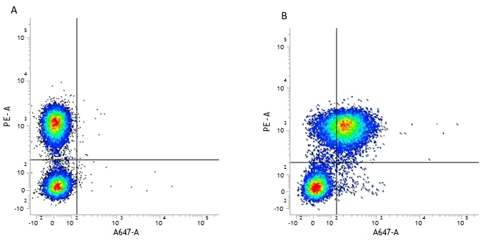 Anti Human CD127 Antibody, clone AbD11592 thumbnail image 3