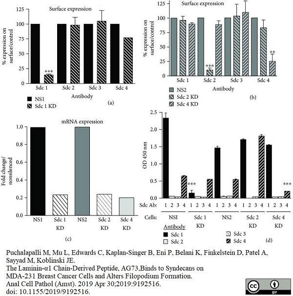 Anti Human CD138 Antibody, clone B-A38 thumbnail image 9