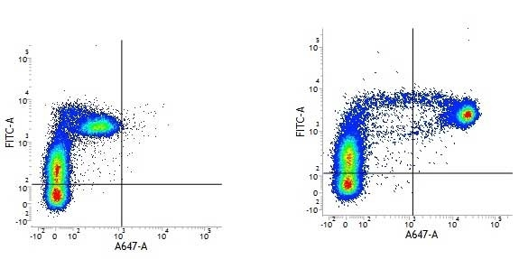 Anti Human CD14 Antibody, clone TÜK4 thumbnail image 2