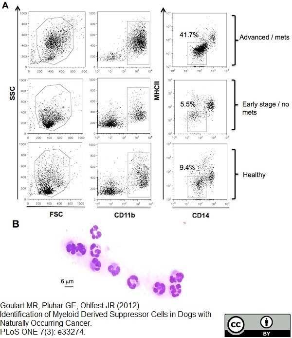 Anti Human CD14 Antibody, clone TÜK4 thumbnail image 8