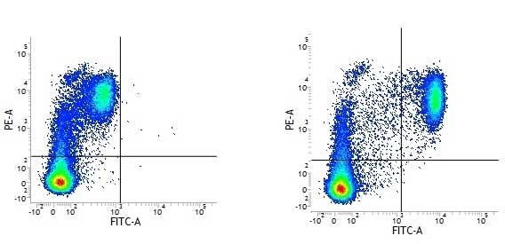 Anti Human CD14 Antibody, clone UCHM1 thumbnail image 3