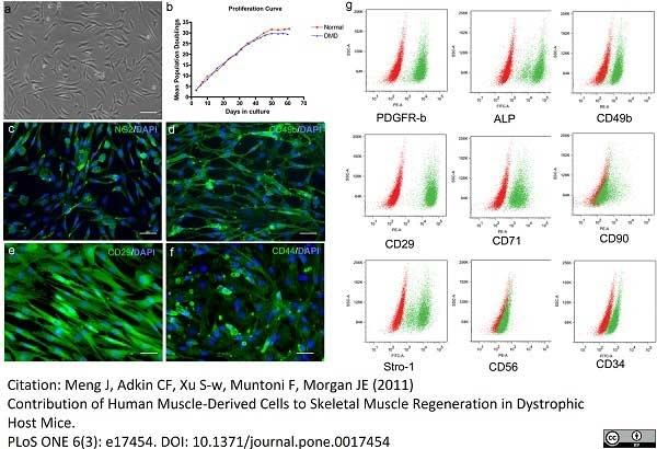 Anti Human CD140b Antibody, clone PR7212 thumbnail image 1