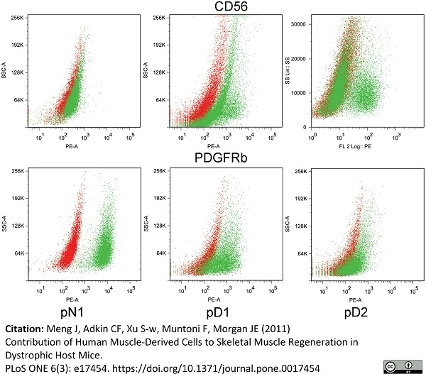 Anti Human CD140b Antibody, clone PR7212 thumbnail image 3