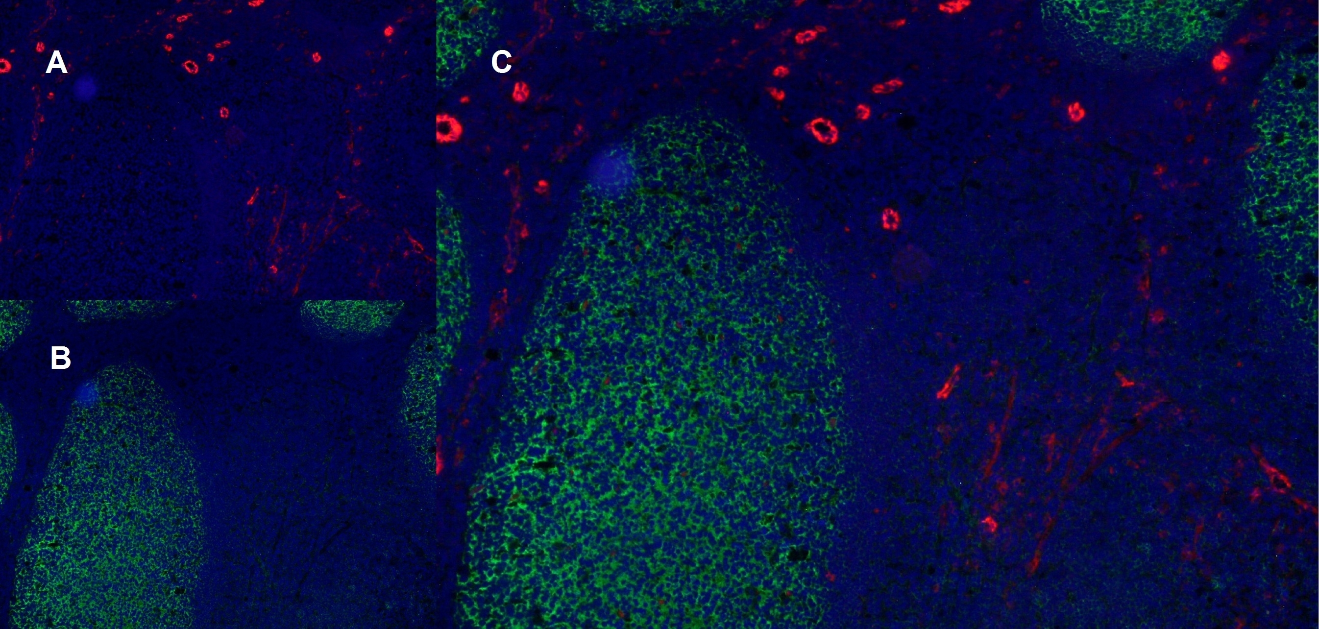 Anti Human CD141 Antibody, clone QBEND/40 thumbnail image 7