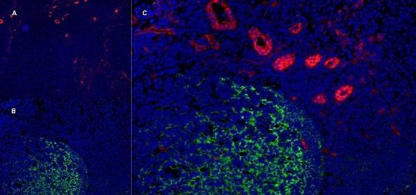 Anti Human CD141 Antibody, clone QBEND/40 thumbnail image 8