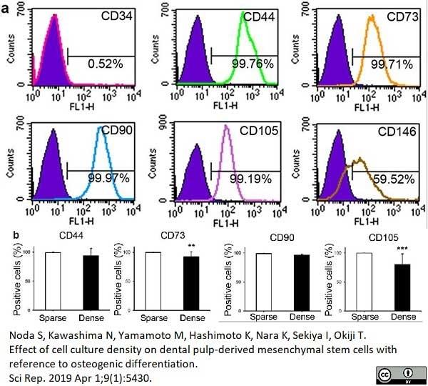 Anti Human CD146 Antibody, clone OJ79c thumbnail image 14