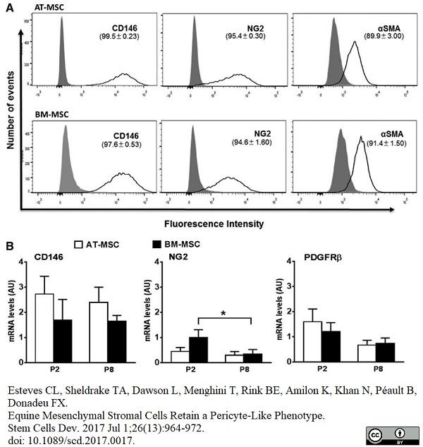 Anti Human CD146 Antibody, clone OJ79c thumbnail image 18
