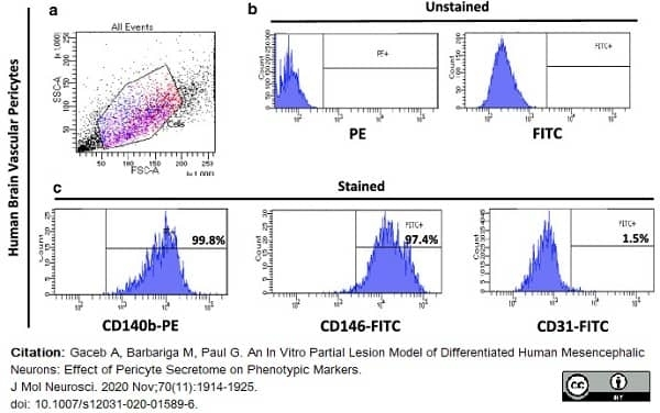 Anti Human CD146 Antibody, clone OJ79c thumbnail image 19