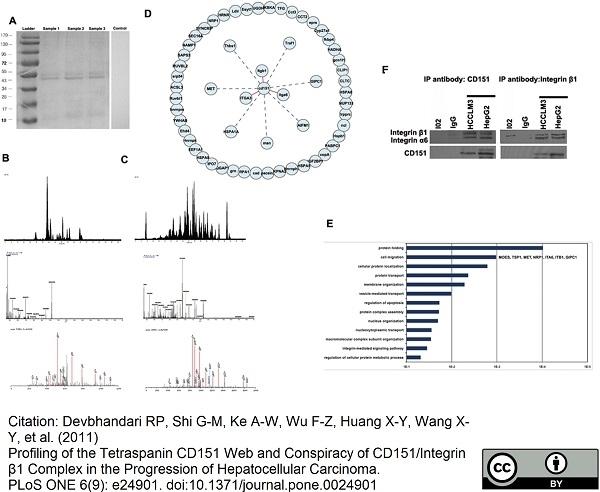 Anti Human CD151 Antibody, clone 11G5a thumbnail image 3