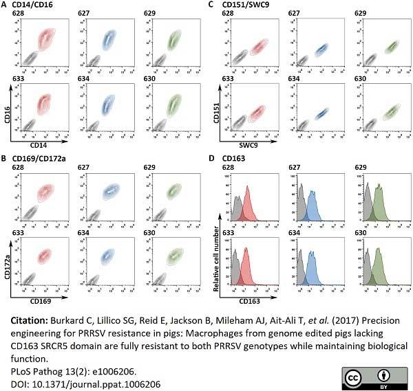 Anti Human CD151 Antibody, clone 11G5a thumbnail image 7