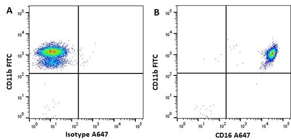 Anti Human CD16 Antibody, clone KD1 thumbnail image 1