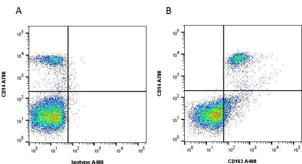 Anti Human CD163 Antibody, clone EDHu-1 thumbnail image 1