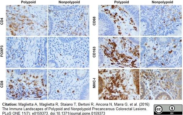 Anti Human CD163 Antibody, clone EDHu-1 thumbnail image 12