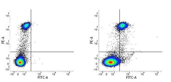 Anti Human CD163 Antibody, clone EDHu-1 thumbnail image 2