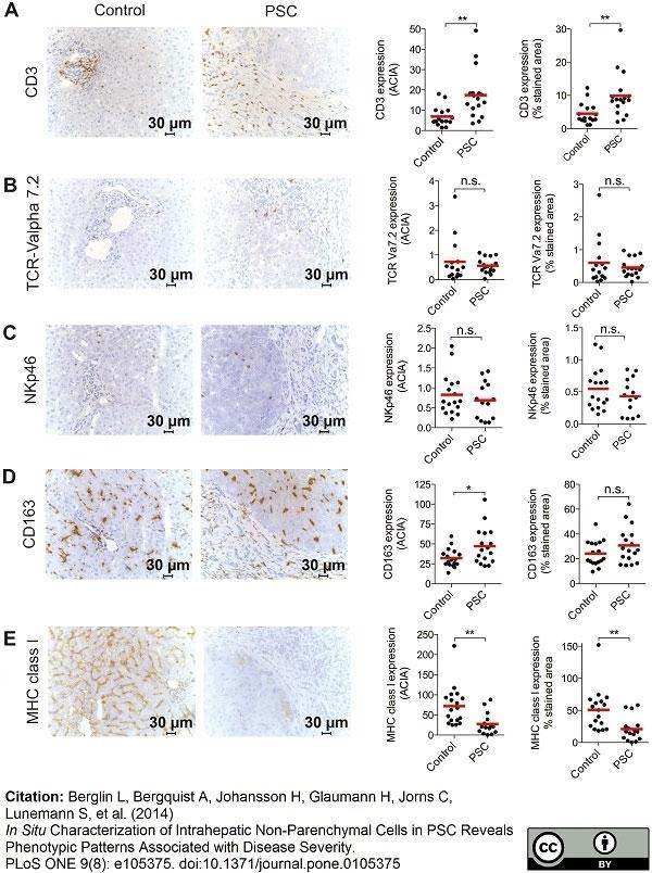 Anti Human CD163 Antibody, clone EDHu-1 | Bio-Rad