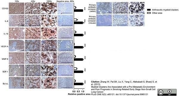 Anti Human CD163 Antibody, clone EDHu-1 thumbnail image 25