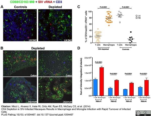 Anti Human CD163 Antibody, clone EDHu-1 thumbnail image 8