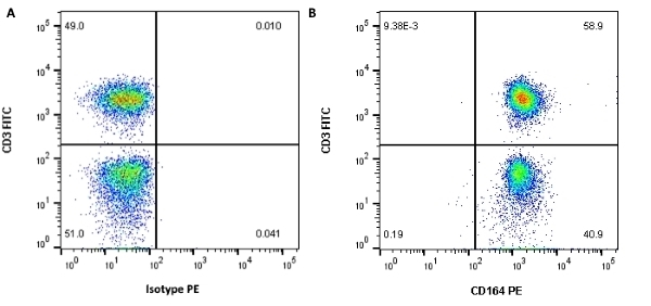 Anti Human CD164 Antibody, clone 67D2 thumbnail image 2