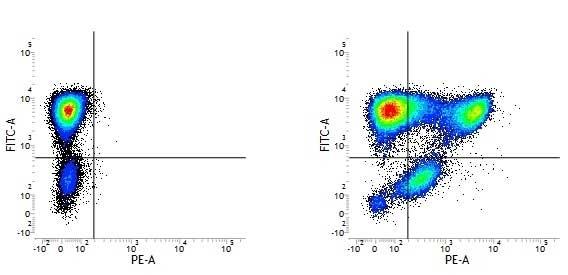 Anti Human CD177 Antibody, clone MEM-166 thumbnail image 1