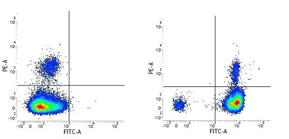 Anti Human CD18 Antibody, clone YFC118.3 thumbnail image 4