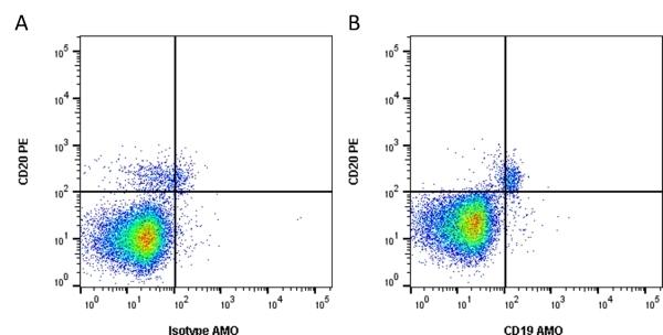 Anti Human CD19 Antibody, clone Bu12 thumbnail image 1
