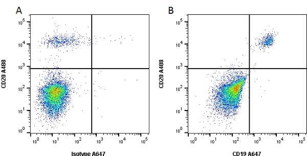 Anti Human CD19 Antibody, clone Bu12 thumbnail image 2