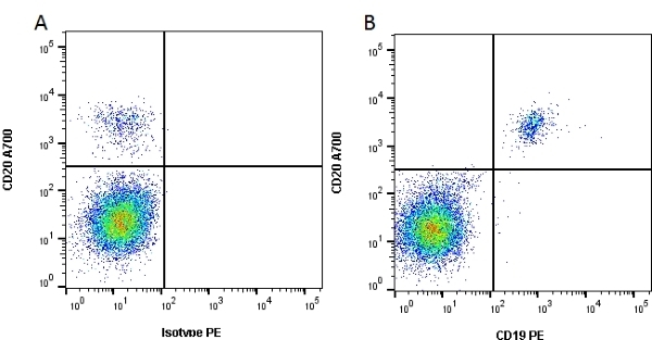 Anti Human CD19 Antibody, clone Bu12 thumbnail image 4