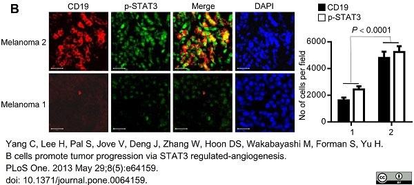 Anti Human CD19 Antibody, clone LT19 thumbnail image 12
