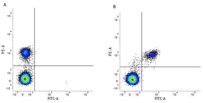 Anti Human CD19 Antibody, clone LT19 thumbnail image 3