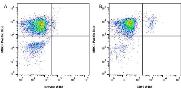 Anti Human CD19 Antibody, clone LT19 thumbnail image 5