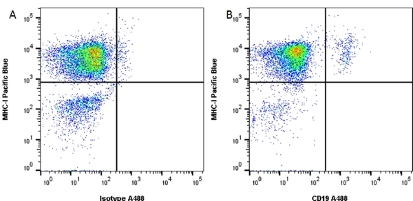 Anti Human CD19 Antibody, clone LT19 thumbnail image 6