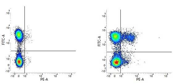 Anti Human CD195 Antibody, clone HEK/1/85a thumbnail image 1