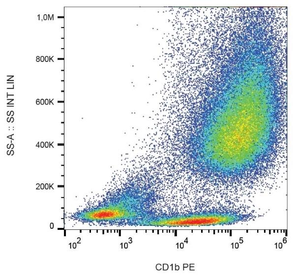 Anti Human CD1b Antibody, clone SN13 thumbnail image 1