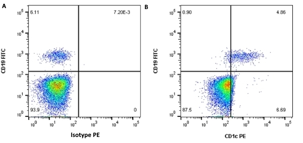 Anti Human CD1c Antibody, clone L161 thumbnail image 2