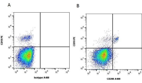 Anti Human CD200 Antibody, clone OX-104 thumbnail image 2