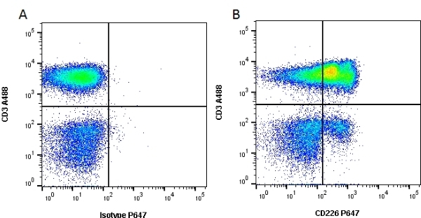 Anti Human CD226 Antibody, clone DX11 thumbnail image 1