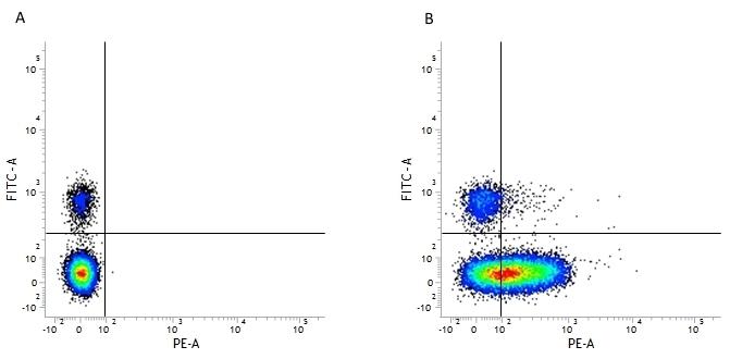 Anti Human CD226 Antibody, clone DX11 thumbnail image 3