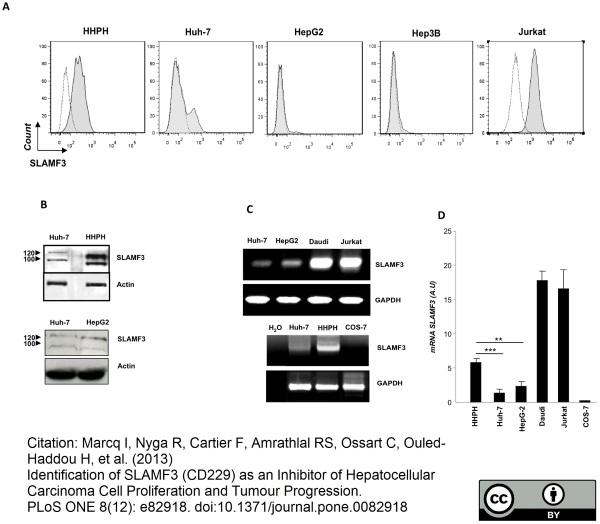 Anti Human CD229 Antibody, clone HLy9.1.25 thumbnail image 1