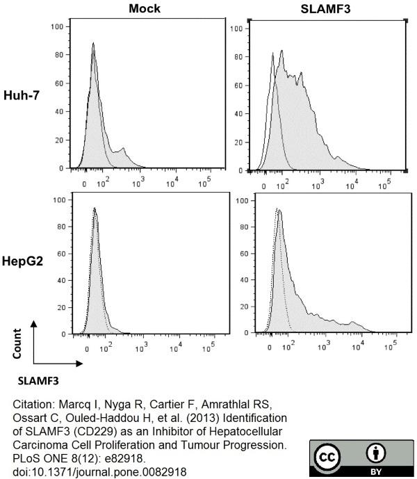 Anti Human CD229 Antibody, clone HLy9.1.25 thumbnail image 6